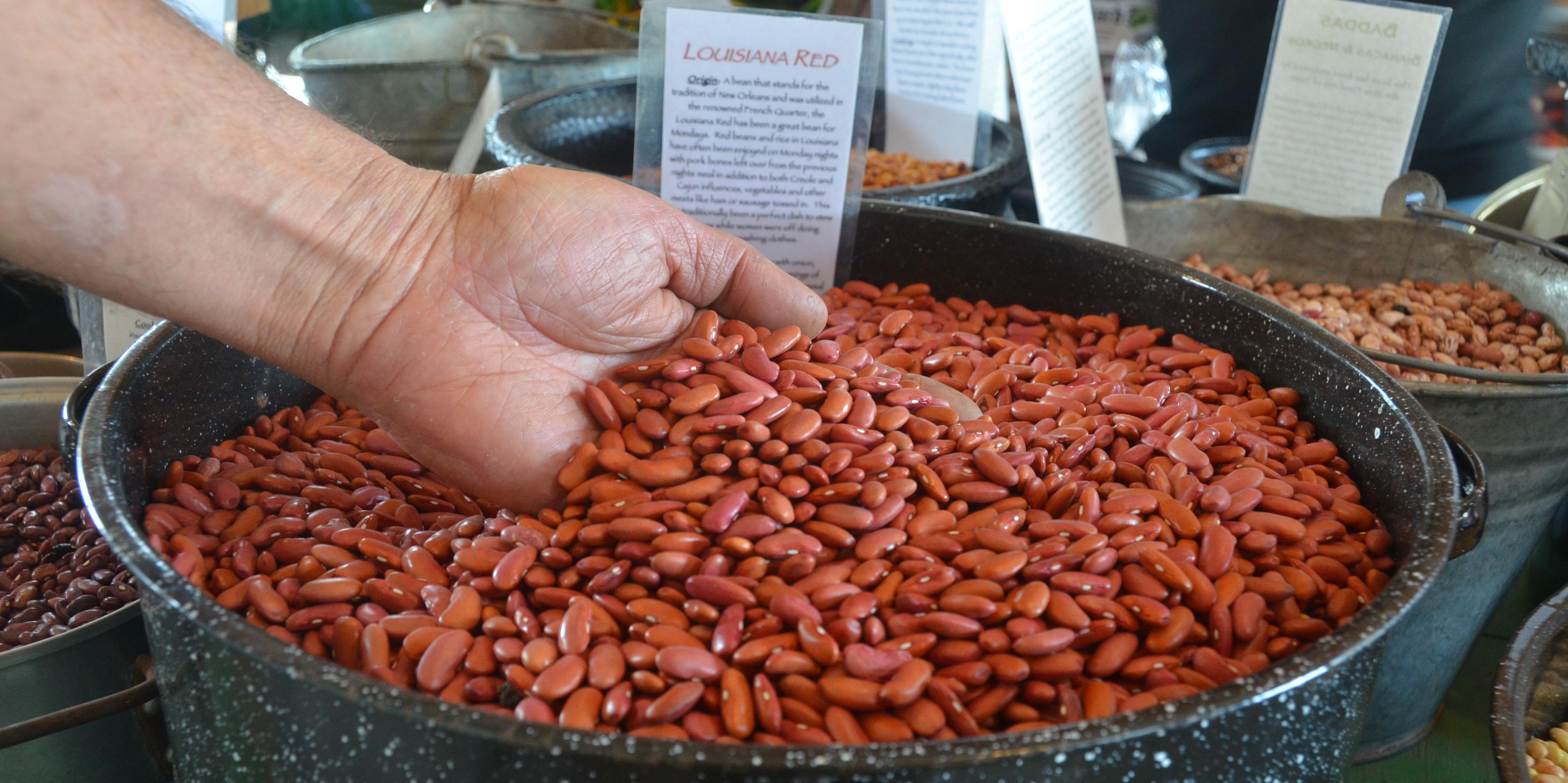 Handful of Beans at Tierra Vegetables in Santa Rosa, CA