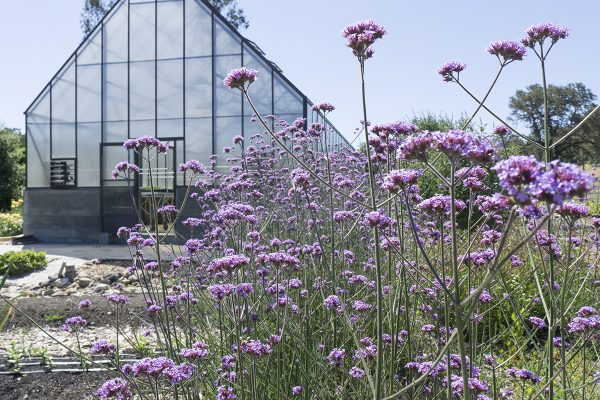 13450 Sonoma Highway 12, Glen Ellen, CA 95442 – IPM flowers and greenhouse in the back