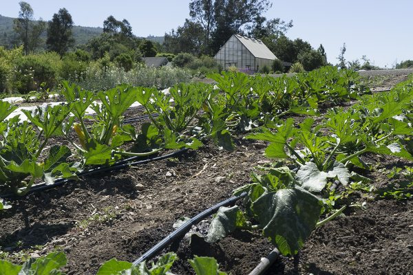 13450 Sonoma Highway 12, Glen Ellen, CA 95442 – Field with greenhouse in the back