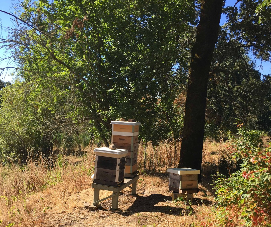 Lizanne Pastore's beehives at Old Hill Ranch