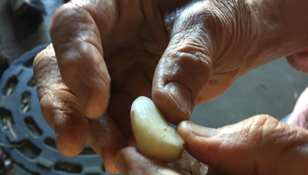Yael Bernier peeling a glove of garlic