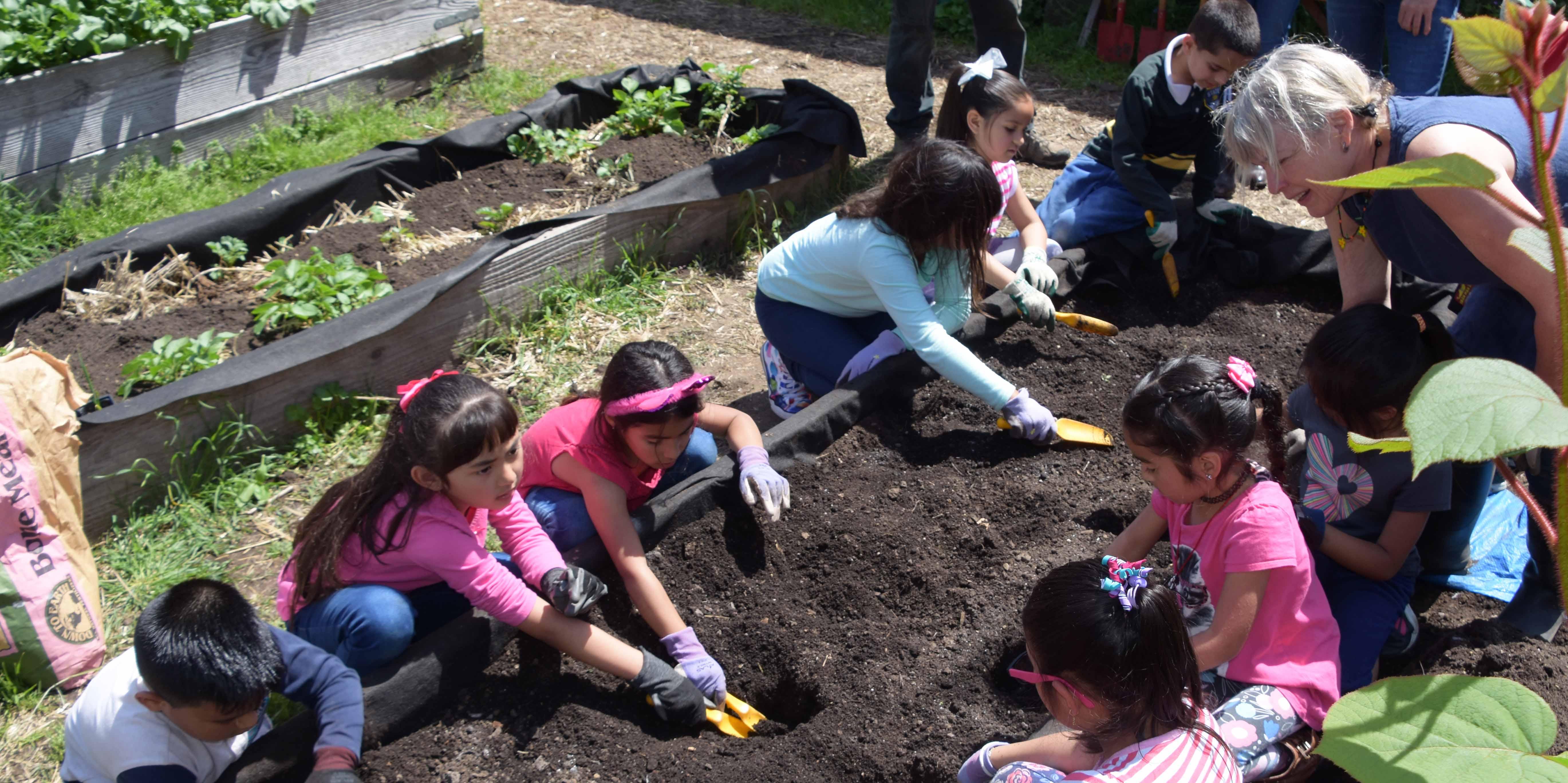 Steele Lane students preparing bed in Vicki's Garden