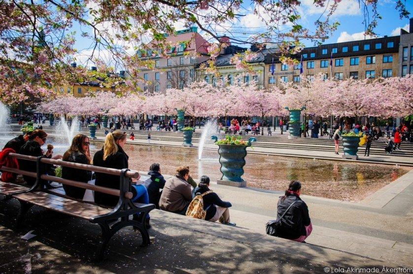 2015_CherryBlossoms_005