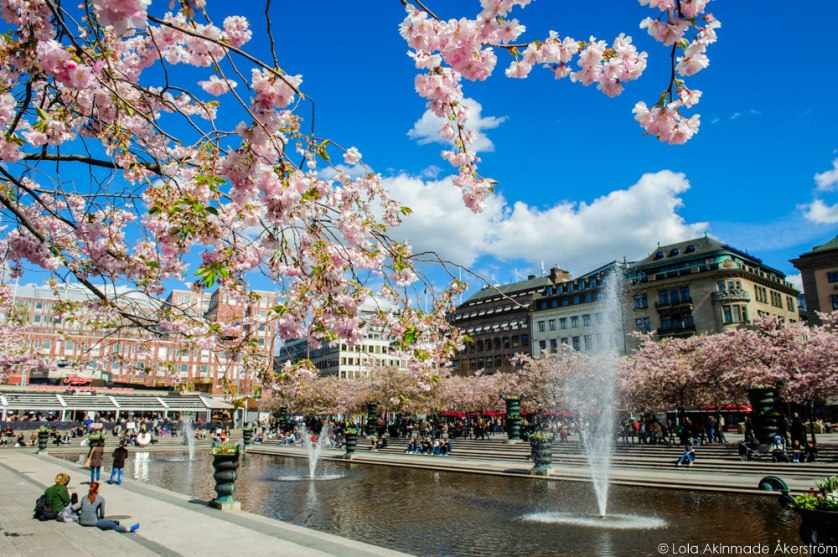 2015_CherryBlossoms_028