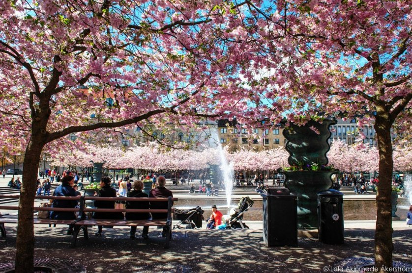 2015_CherryBlossoms_043