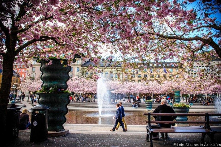 2015_CherryBlossoms_055
