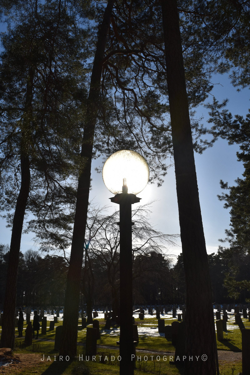 skogkykogarden 4
