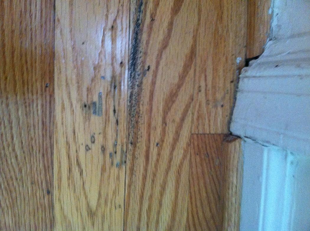 Termite Damage to Hardwood Flooring Archives  SlugABug Inc