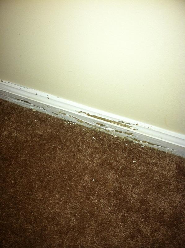 Termite damage to baseboard Archives  SlugABug Inc