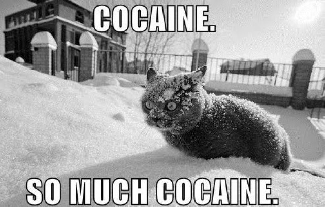 cocaine-so-much-cocaine