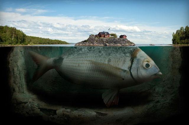 Fisch Insel