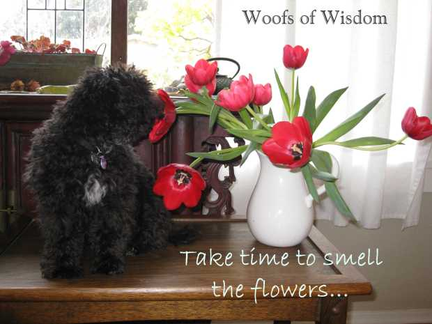 Woofs of Wisdom Smell the Flowers