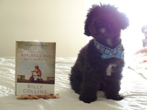 """""""Billy Collins' poem, 'A Dog on His Master' takes us into the bittersweet heart of the relationship between a dog and its human."""""""