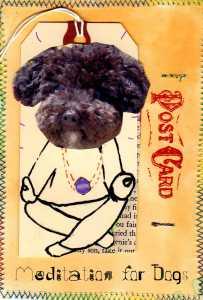 Small Poodle at Large | Harper B. | Dog Blog |Meditation for Dogs