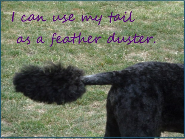 feather duster secret bark 20