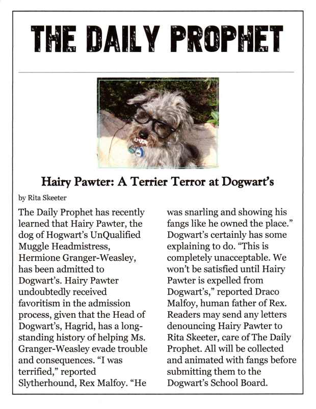 Small Poodle at Large | Harper B. | Dog Blog | Hairy Pawter Terrorizes Dogwart's
