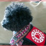 """""""I really enjoy being a therapy dog...but when I saw the segment on the therapy mini-horse, I felt a little insecure."""""""