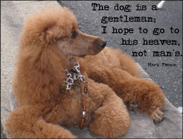 The Dog is a Gentleman | Mark Twain
