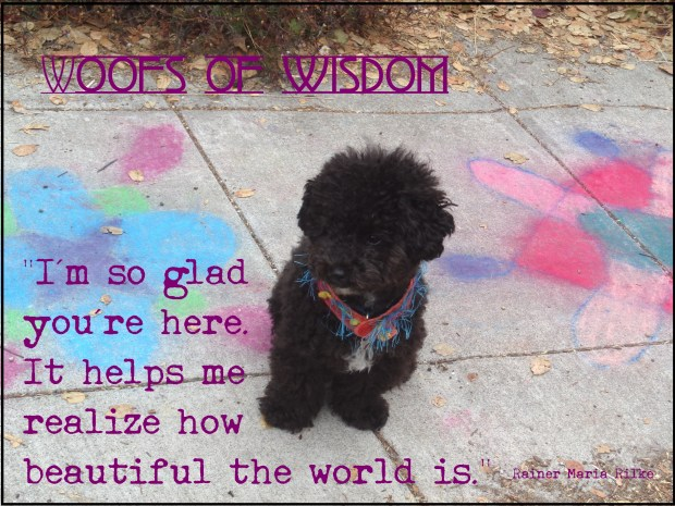 Harper B. | Small Poodle at Large | Dog Blog | Woofs of Wisdom