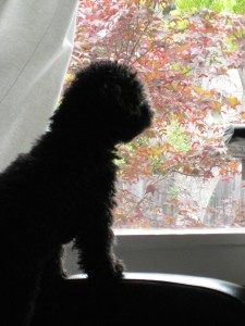 """I was so busy looking at my front window, I never thought to look in my Dog Blog Comments Trash."""