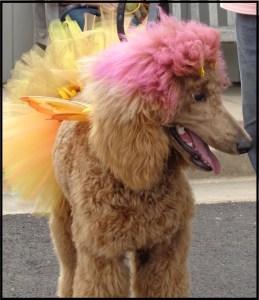 Fairy Poodle