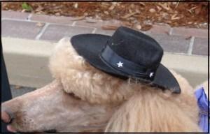 Longmire Poodle