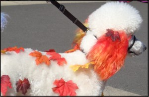 The Fall Poodle