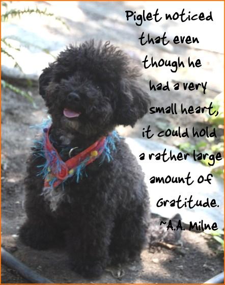 harper gratitude