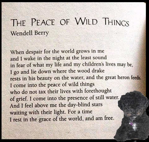 the-peace-of-wild-things