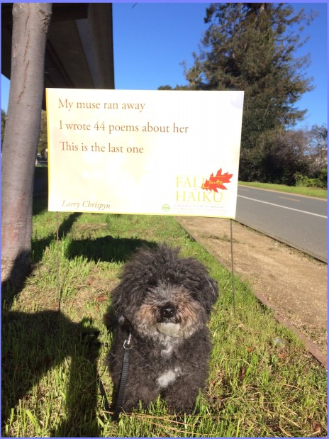 Harper B, poodles and poems
