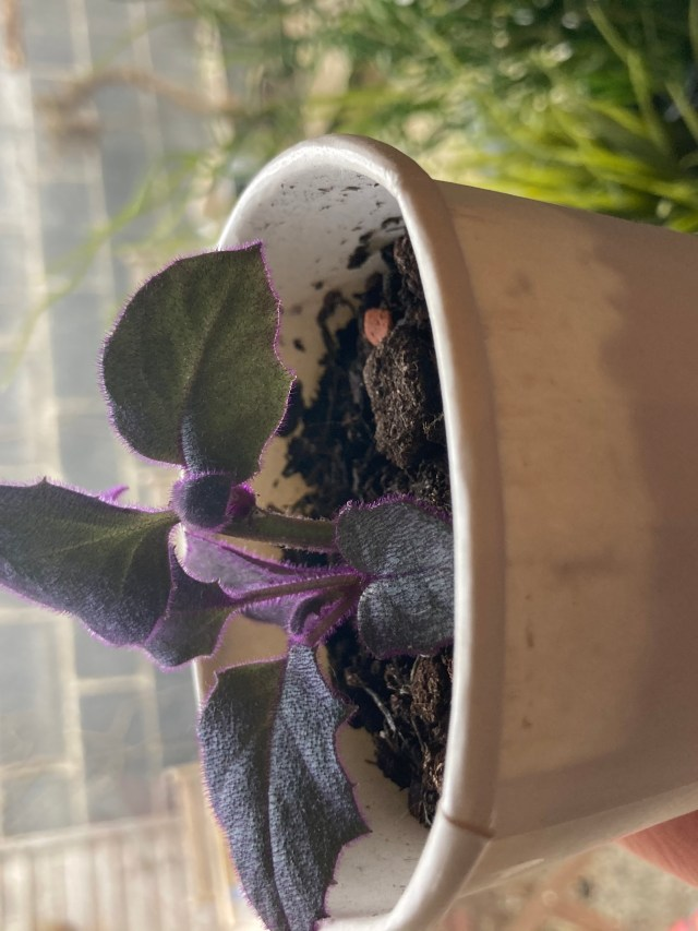 reuse coffee cup for plants