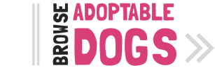 Adopt a Pet Small Dog Rhode Island