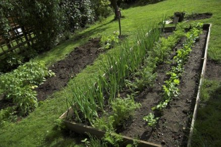 Last Year's Veg Patch
