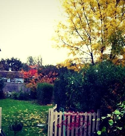 autumn_garden