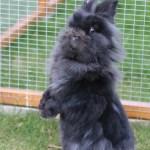 Goodbye my beautiful bunny