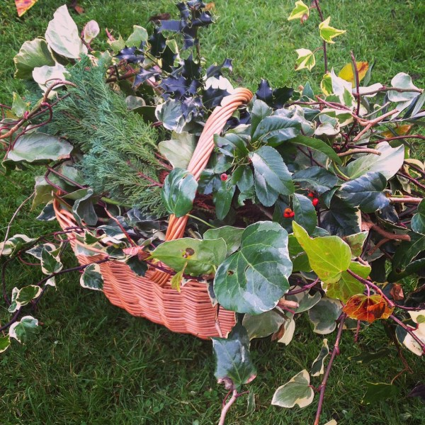 Foraging for foliage for my Christmas Wreath