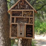 Insect house in use at Zilker Botanical Garden in Austin, TX.