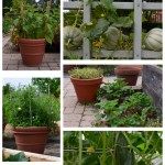 Urban Demonstration garden in Chicago uses containers and trellises to grow more food in less space.