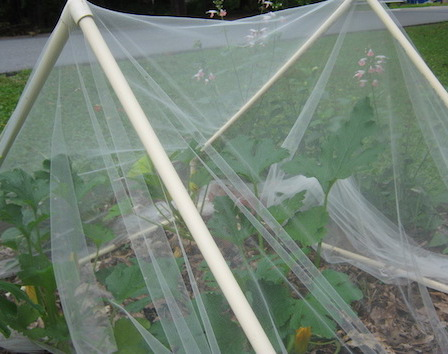 Tulle fabric, a very find kind of netting, over a PVC frame protects plants from deer and other wildlife.