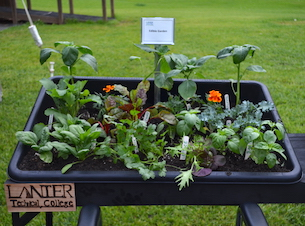 Accessible garden container with edible plants including peppers.