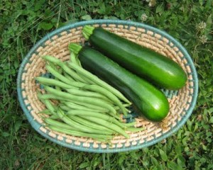 Freshly harvested green beans and two green zucchinis in an oval basket.