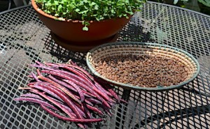 Purple pea pods and brown shelled-out Southern peas in a flat basket