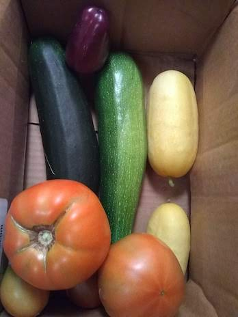 Tomatoes, squash, cucumbers in a cardboard box.