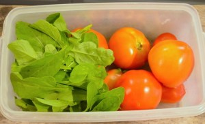 Plastic tub containing harvested tomatoes and arugula from the garden