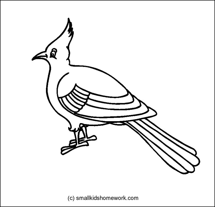 Bulbul Bird Outline and Coloring Picture with Interesting
