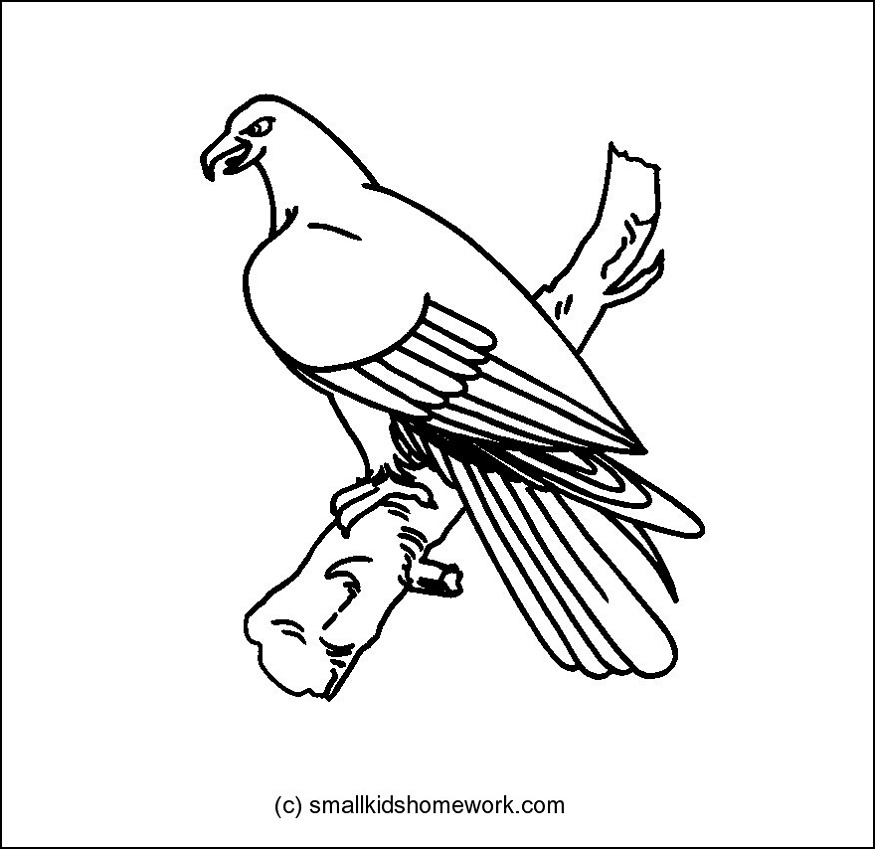 Eagle Bird Outline and Coloring Picture with Interesting Facts