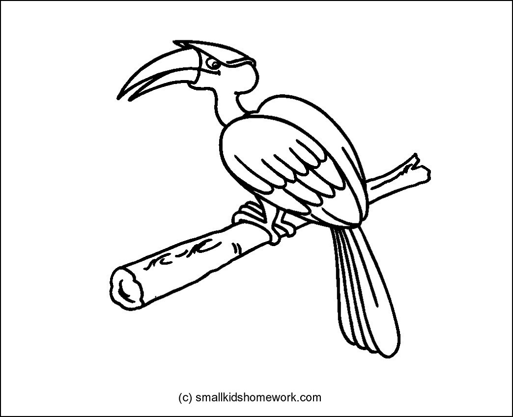 Hornbill Bird Outline and Coloring Picture with