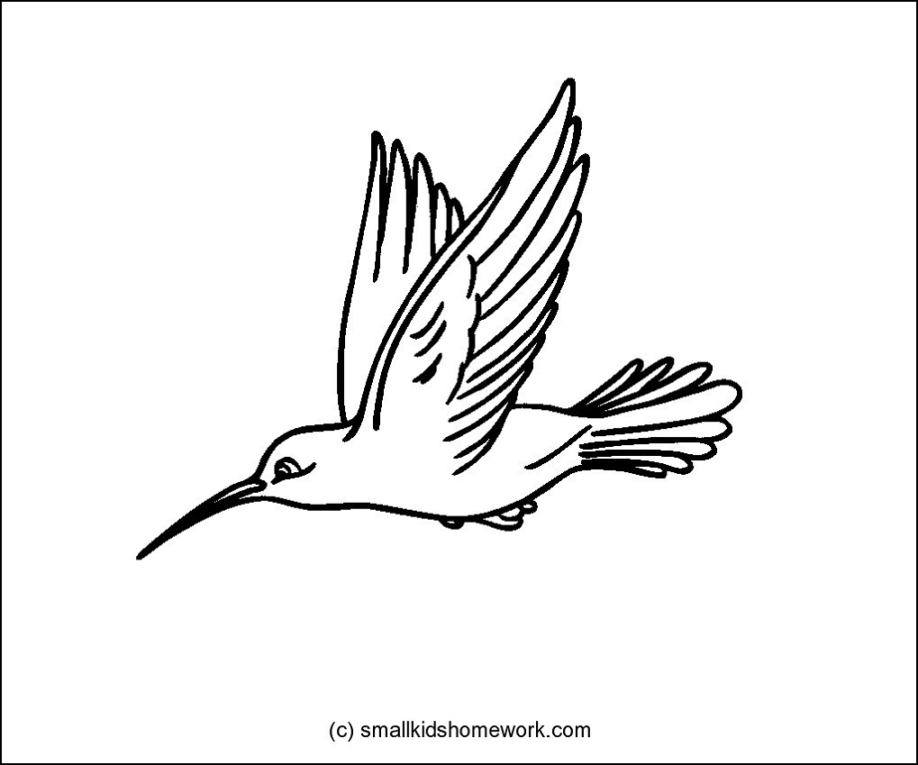 Hummingbird Outline and Coloring Picture with Interesting