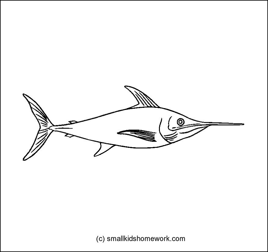 SwordFish Outline and Coloring Picture with Interesting Facts