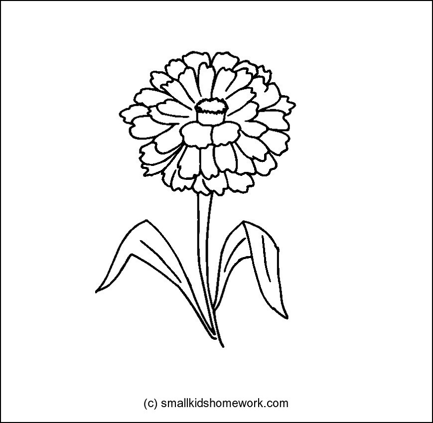 Zinnia Flower Outline and Coloring Picture
